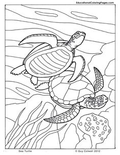 sea turtle coloring