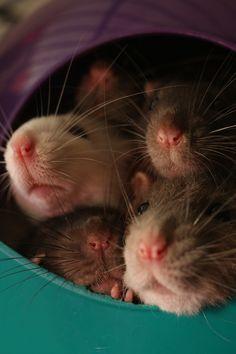 Steph's Condensed Brain Farts (many-splendored-rat: Great job, Space Pod! You...)