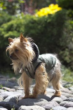 Chaleco de perro Köpek - alta costura en ropa de perros $407.00