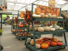 Heirlooms And Other Interesting Pumpkins Squashes Hicks Nurseries