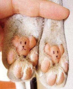 Cat has bear paws! XD