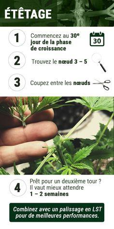 Weed, Bonsai, Blog, Herbs, Plants, Indoor, Magic, Growth Hormone, Interior
