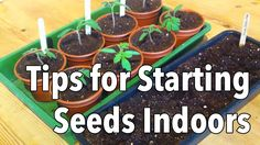 Starting plants from seed is economical and helps your plants get a head-start and produce an earlier and longer harvest. This video presents a step-by-step ...
