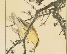 """Items similar to Japanese Antique Original Woodcut Print, Imao Keinen, """"Farfugium japonicum, Meadow Bunting"""" on Etsy Nutmeg Tree, Eurasian Magpie, Cypress Vine, Green Pigeon, Greenfinch, Barn Swallow, China Rose, White Eyes, Peach Blossoms"""