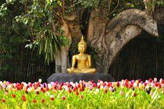 jardin asiatique - statue de Bouddha en métal de couleur or, arbre géant et tulipes multicolores