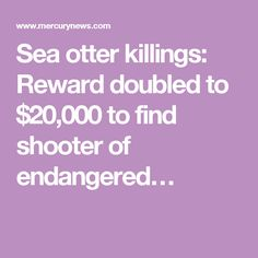 Sea otter killings: Reward doubled to $20,000 to find shooter of endangered…