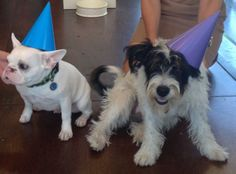 Henry and Magpie sure do know how to celebrate a first birthday!