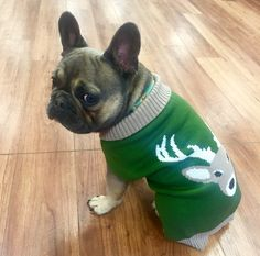 """""""So where's the ugly sweater party?"""", Rex the French Bulldog"""