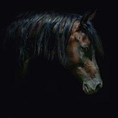 horse-photos-02