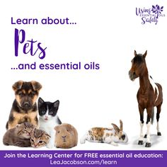 Essential Oil Safety, Essential Oils, Learning Centers, Education, Pets, Onderwijs, Learning, Animals And Pets, Essential Oil Uses