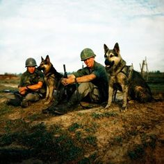 """Approximately 5,000 US war canines served in the Vietnam War, however the US Army did not keep records prior to 1968. Michael Lemish, military dog historian and author estimates that K9 teams prevented about 10,000 casualties! And although they were real troopers, only a few hundred dogs """"came home."""" The remaining were either euthanized or left behind for the South Vietnamese. We remember their amazing service!"""