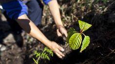 8 de julio, arranque oficial de la Campaña Nacional de Reforestación      ·         Por primera vez, México celebrará el Día Nacional del Combatiente Forestal