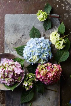Hydrangeas can generally be broken down into two main groups: mopheads and lacecaps. Each group contains a gorgeous assortment of species and varieties. We're sharing some of our favorites and giving you tips on how to care for hydrangeas.