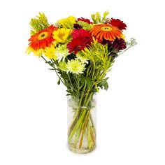 Gerbera Duo Bouquet Mother Day Wishes, To Spoil, Gerbera, Beautiful Gifts, Bouquet, Flowers, Mothers, Clothing, Food
