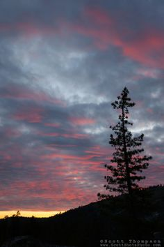 """""""Sunset Near Paradise Lake"""" - Photograph of a pine tree silhouette at sunset taken near Paradise Lake in the Tahoe National Forest."""