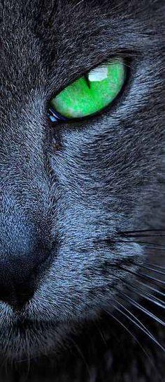 Green Eyed Cat.