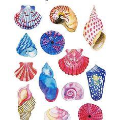 🐚S E A L I F E🐚 3  .  .  .  #sealife #watercolor #gansaitambi #seashells #blue #nature #ocean #illustration #sketchbook #drawing #artist #artwork #painting #draw #design #art #artsy #instaart #artoftheday  #creative #workinprogress #designspiration #worldofartists #doitfortheprocess #getcreative #decor #home #art_we_inspire #artlicensing