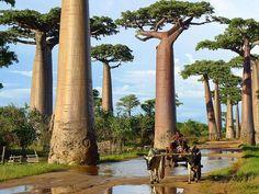 Los 17 árboles más espectaculares del mundo - Taringa!