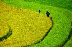 La saison des récoltes à Bac Ha (Lao Cai, Vietnam). En savoir plus : https://www.amica-travel.com/vietnam-sites-a-decouvrir/nord-vietnam/bac-ha #bacha #laocai #vietnam