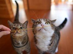 maru and hana cat smell pasta