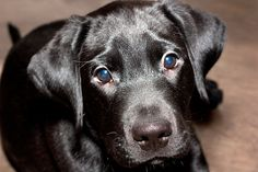 I think labradors are my favourite dog breed!