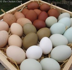 The Chicken Chick®: How a Hen Makes an Egg & Egg Oddities.