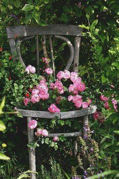 ♡ Miss Potter's Garden