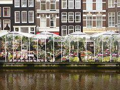 Marché aux fleurs d'Amsterdam. (définition réelle 2 592 × 1 944)