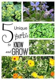 Learn about 5 herbs that are super easy to grow, off the beaten path and offer more than a pretty face. ~ gardenmatter.com