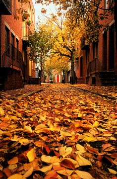 """mistymorningme: """" the red door by moocatmoocat Manning Street, looking towards Quince St., in Center City, Philadelphia """" Autumn leaves Beautiful World, Beautiful Places, Beautiful Streets, All Nature, Autumn Nature, Belle Photo, Autumn Leaves, Autumn Fall, Red Leaves"""