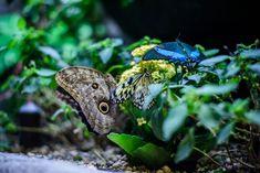 Vepřová plec na hořčici a barevném pepři :: Tipy na Výlety a zábava Gnocchi, Butterfly, Nature, Pictures, Animals, Beauty, Design, Photos, Naturaleza