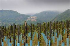 Kiszely István  Szeptember Csókakőn ... Szeptemberi csókakői kép a szőlőből. Több kép Istvántól: www.facebook.com/istvan.kiszely