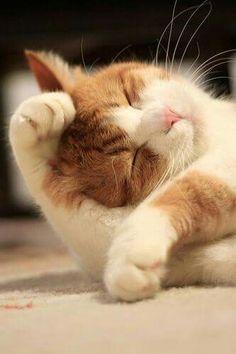 Mi lindo gatito !