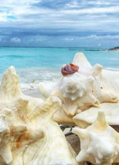 The famous conch of Turks & Caicos