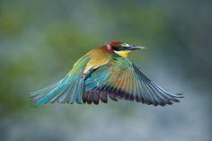 Color hat Photo by Esteban Sanchez — National Geographic Your Shot