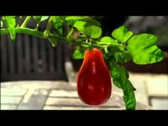 Heinz Tomato Ketchup : Grown Not Made - YouTube