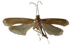 moth prevention.