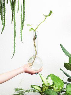 5 gouden stektips voor een huis vol planten | vtwonen.nl Begonia, Plant Hanger, Roots, Bulb, Drop Earrings, Flowers, Plants, Instagram, Amsterdam