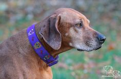 Day of the dead skull - Collar in purple - Hundehalsband in lila