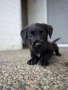 Hello! Here is a cute puppy! | 25 Adorable Animals To Brighten Your Day
