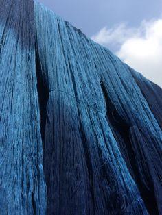 藍染めの綿糸 Indigo dyeing of the cotton yarn