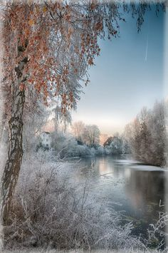 16 Winter scene (Location and photographer unknown. Reverse image search finds nothing of use.)