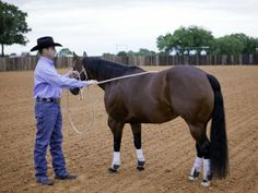 Groundwork Training Lesson with Top Trainer Clinton Anderson