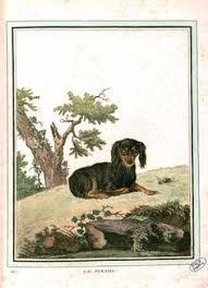 Resultado de imagen de Georges-Louis Buffon prints