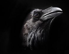Raven by Pat Gaines