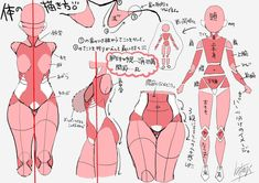 how to draw, body, original / 個人的な身体の描き方まとめ! - pixiv Anatomy Sketches, Body Sketches, Anatomy Drawing, Anatomy Art, Art Sketches, Girl Anatomy, Head Anatomy, How To Draw Anatomy, Zbrush Anatomy