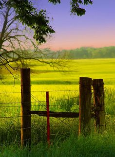 Fence posts in field
