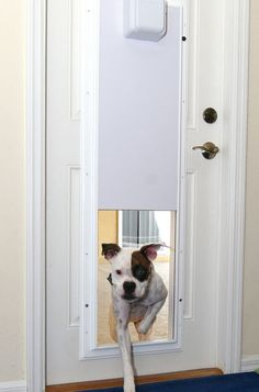 THIS doggy door doesn't open to let other little creatures in too. It opens with his collar!  Electronic Pet Door with One Touch Programming