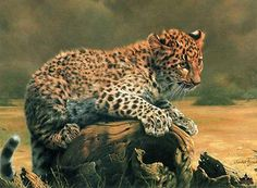 """""""African Leopard Cub"""" by Charles Frace"""