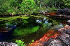 Colombia's river of Five Colors
